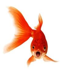 fish_3_large.jpg