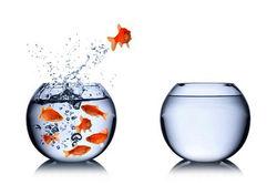 jumping-fish_1_resized.jpg