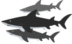 sharks_small_resized.jpg