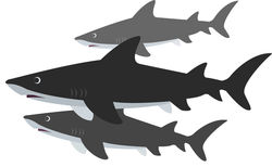 sharks_small_resized.jpg