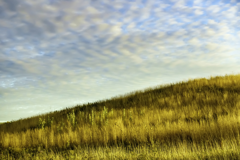 Magic hour on a fall afternoon Hillside with tall grass and other prairie plants in swathes of light and shadow, with pattern of high clouds glowing softly in blue sky, near sunset in mid October